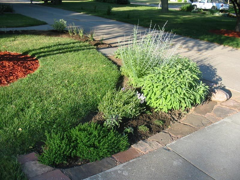 Driveway Landscaping Ideas Plants