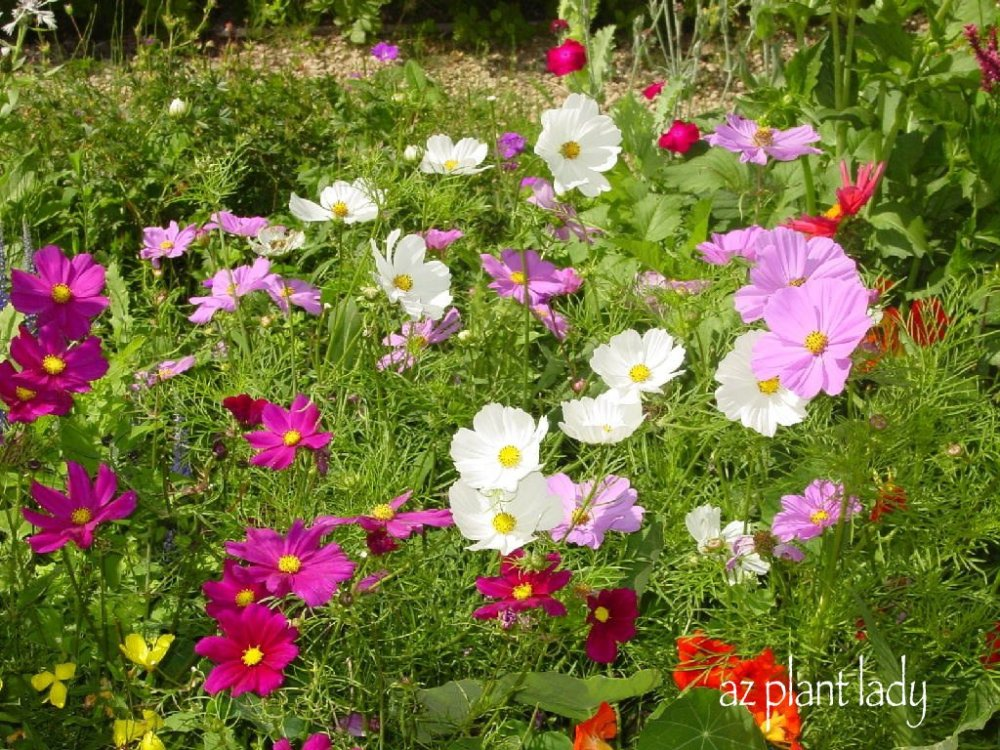 Drought Tolerant Gardening Ideas