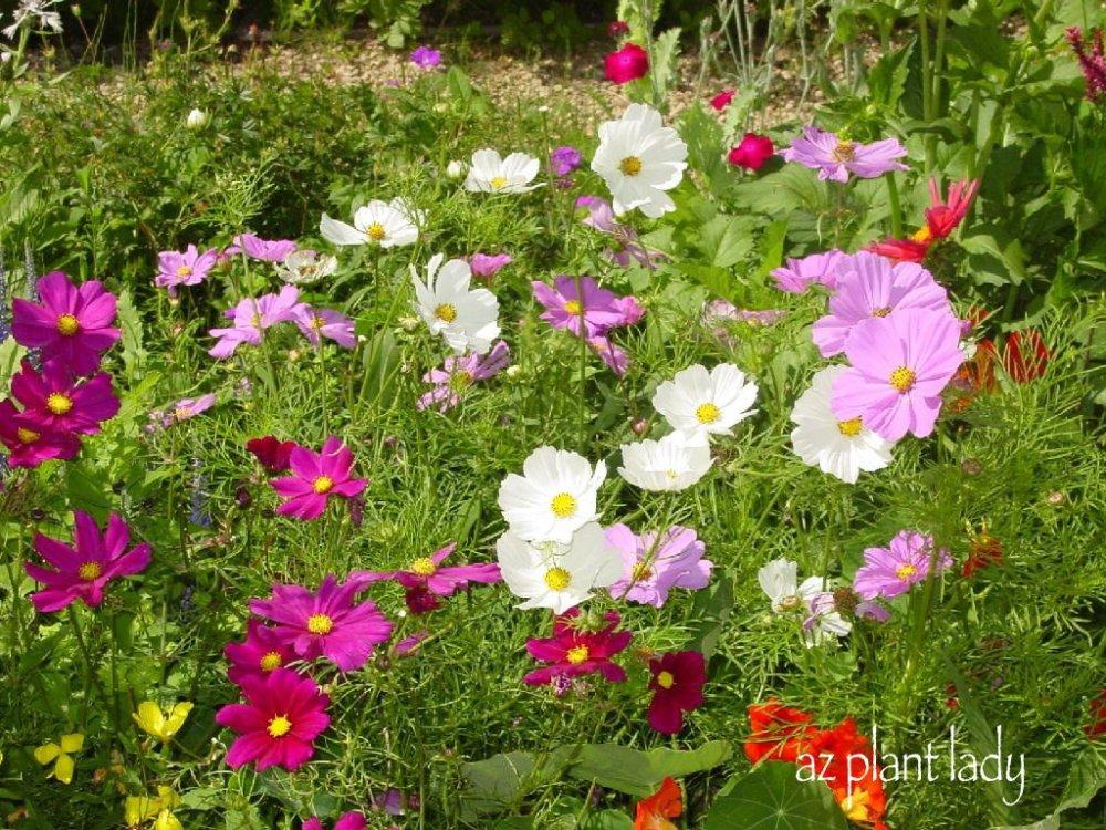 Drought Tolerant Gardening Ideas