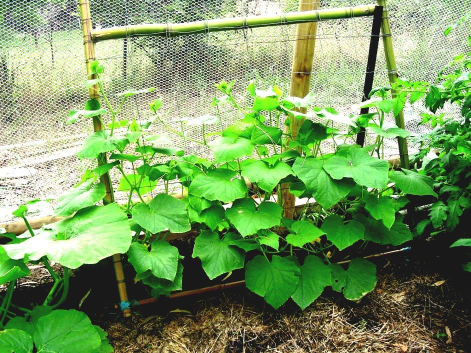 Easy Gardening Ideas For Beginners