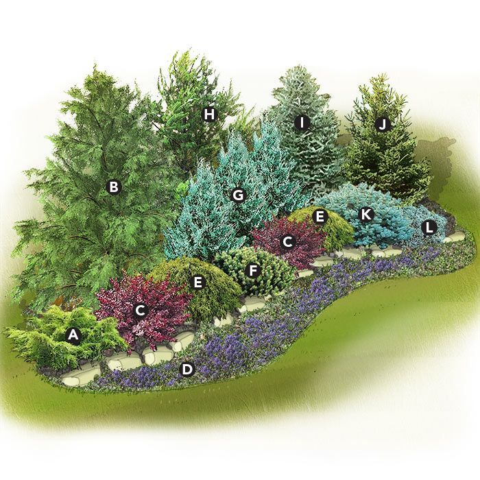 Evergreen Landscaping Ideas Zone 6