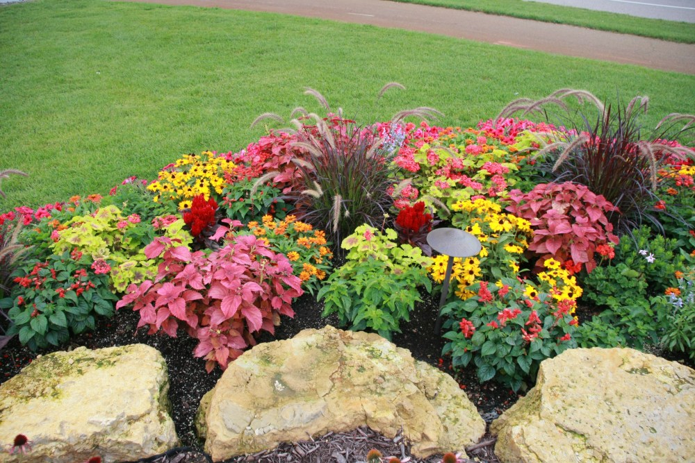 Front Of House Planting Ideas