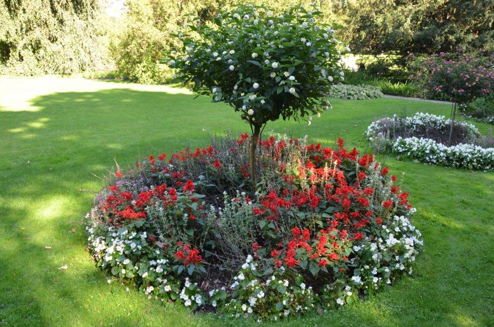 Fruit Tree Landscaping Ideas