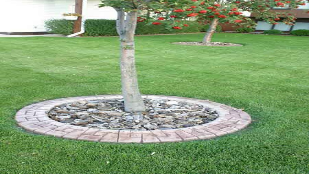 Landscape Edging Ideas Around Trees