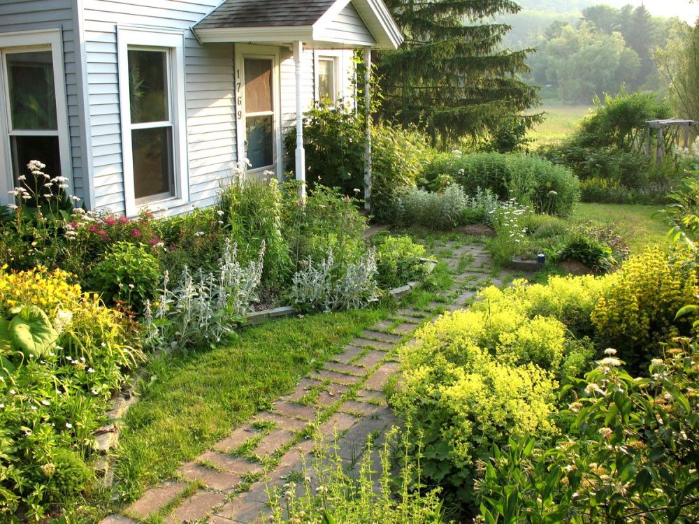 Landscape Ideas For Small Backyards With Dogs
