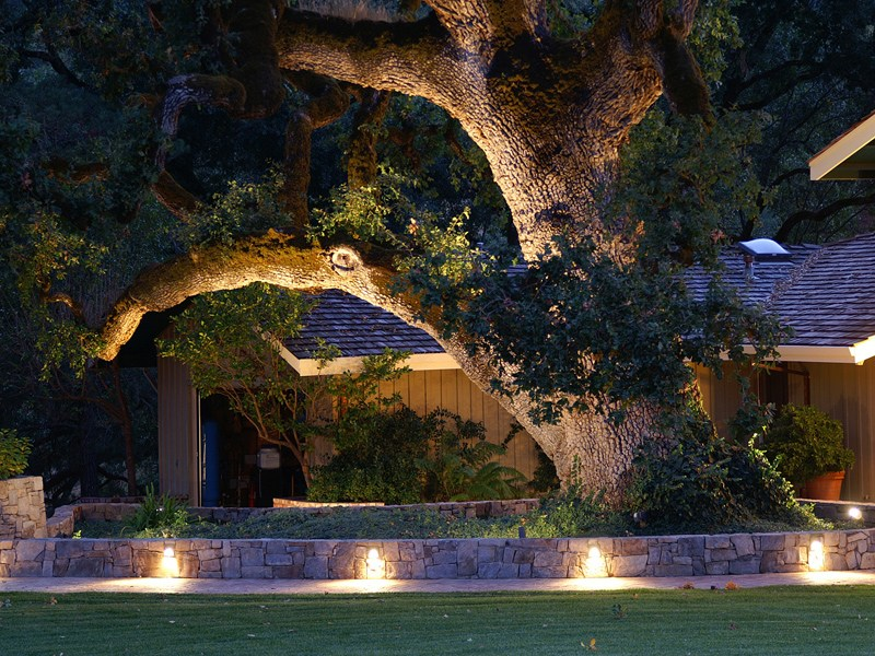 Landscape Lighting Ideas Trees
