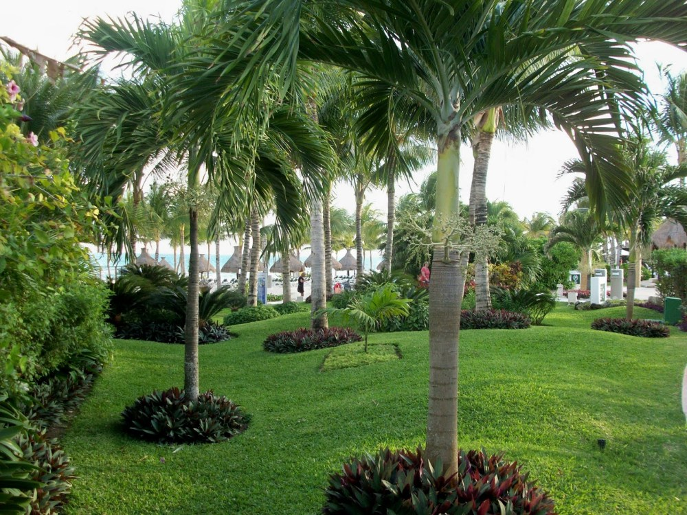 Landscaping Ideas Around Palm Trees