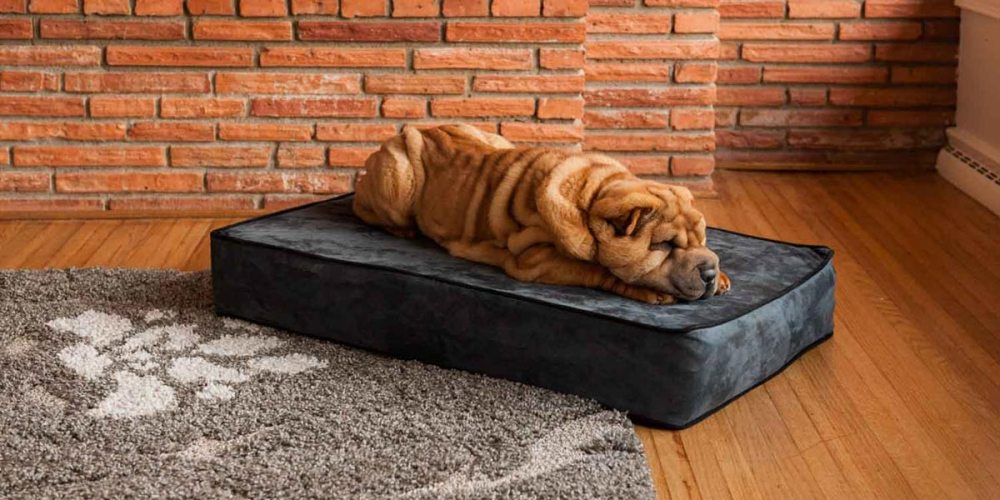 Metal Frame Beds For Dogs