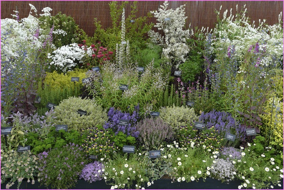 Outside Planting Ideas