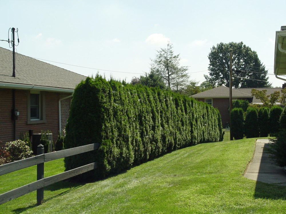 Pictures Of Landscaping Ideas For Small Front Yards