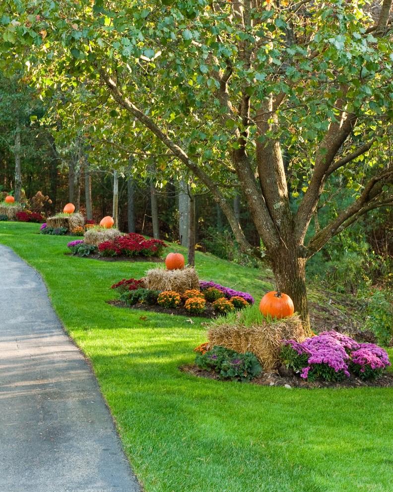 Pine Tree Landscaping Ideas