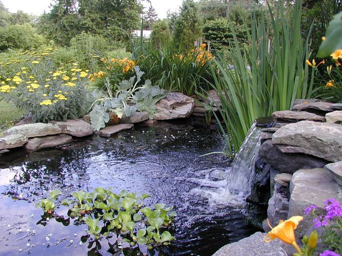 Pond Landscaping Images