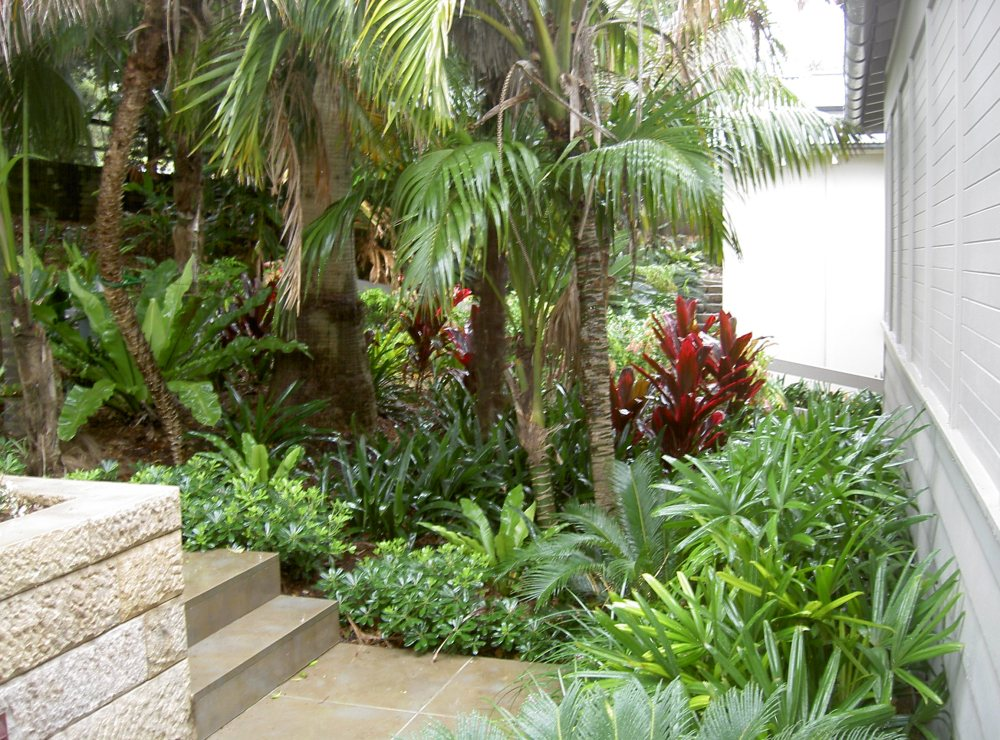 Tropical Landscape Ideas Pinterest