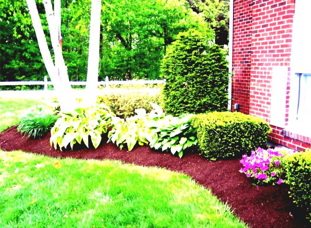 Tropical Landscaping Ideas For Front Of House