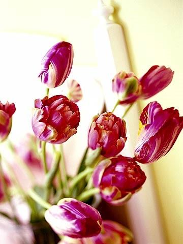 palatka cvety