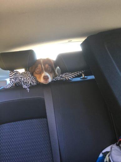 Несчастье в багажнике