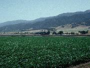 Salinas valley
