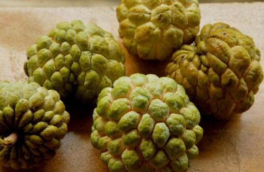 Fall harvests: custard apple