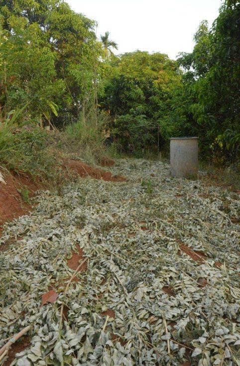 soil cover, khad, compost, vrindavan, farm, natural