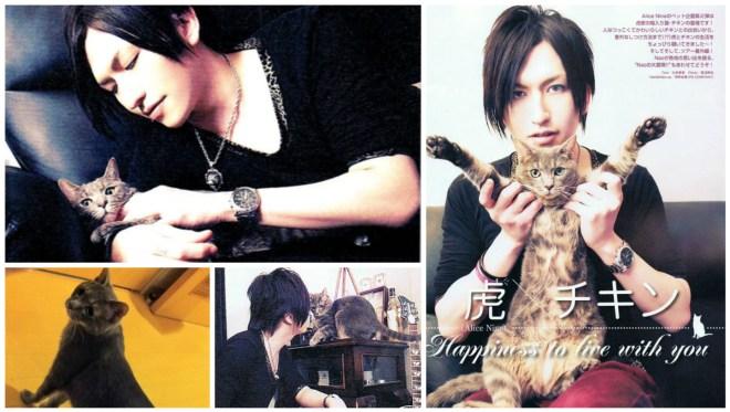 A9 Tora cat