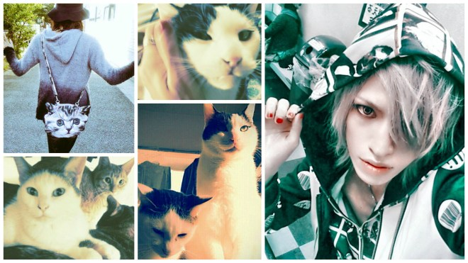 Born Ryoga cat