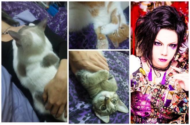Kiryu Mahiro cats