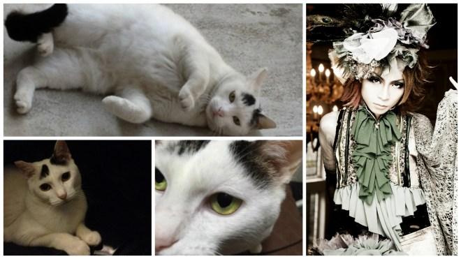 Moran Sizna cat