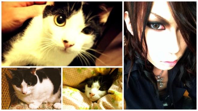 NOCTURNAL BLOODLUST Natsu cat