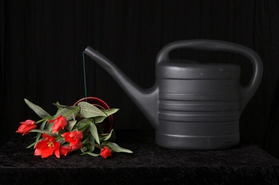 Zwarte gieter met tulpen.