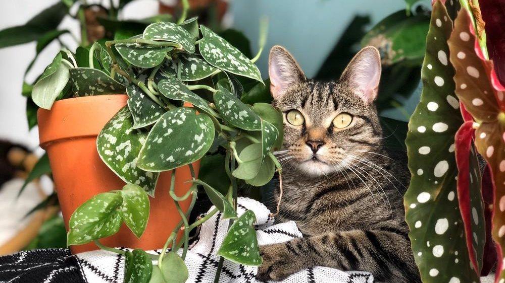 Plantas perras of plantas gatas