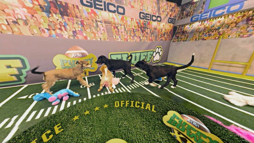 puppy-bowl-vr-discovery5