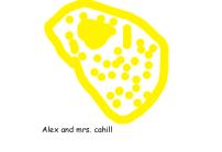 2C - alex