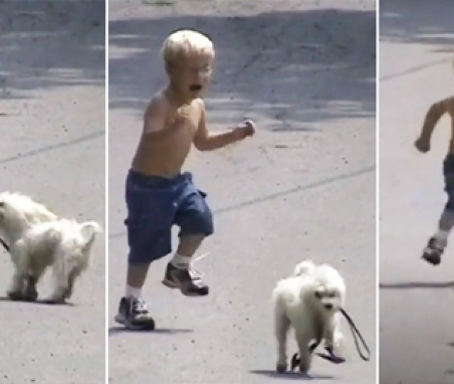 These Funny Dogs Made My Day