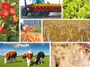 Agriculture-collage