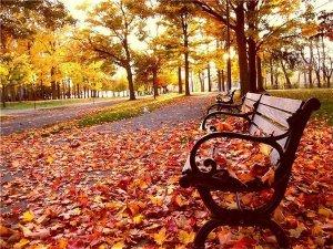 я люблю тебя мой старый парк4