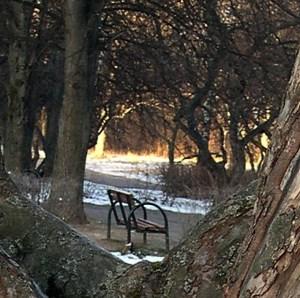 я люблю тебя мой старый парк1