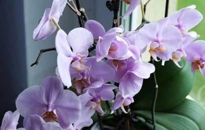 Орхидеята ни пази от опасности