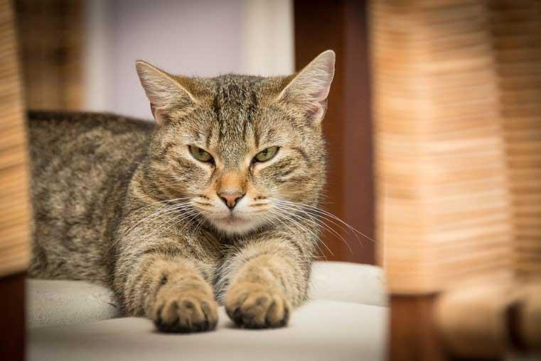 Няколко причини котките да месят с лапи
