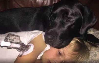 куче спаси