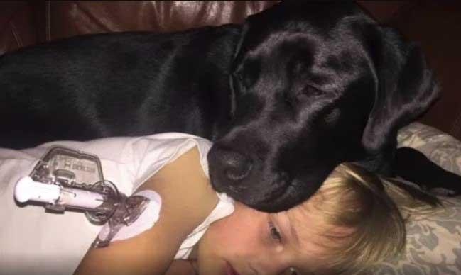 Куче спаси човешки живот на дете