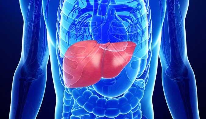 черният дроб
