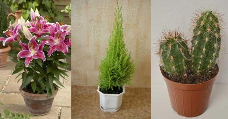 Цветята, които носят нещастие