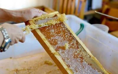 Ползата от пчелен мед е спорна