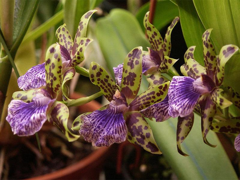 Как правильно ухаживать за орхидеями самостоятельно в домашних условиях