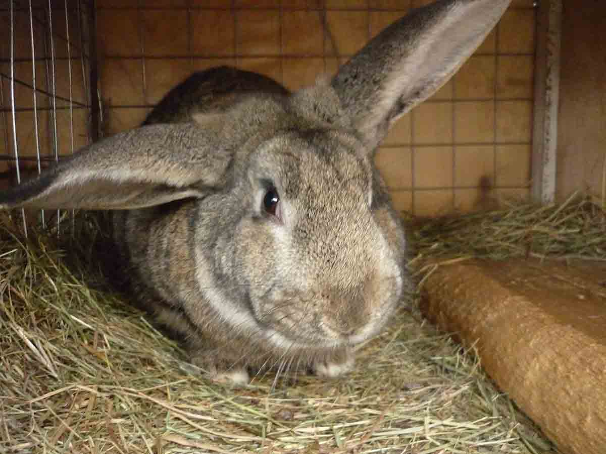Кормление кроликов в домашних условиях для начинающих 710