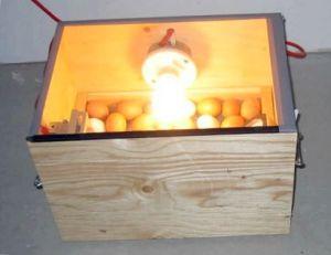 Как подготовить яйца к инкубации