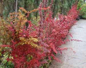Выбираем декоративные растения