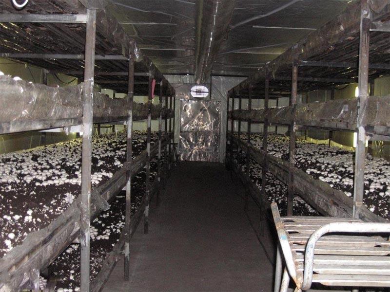 Помещение для выращивания шампиньонов самостоятельно