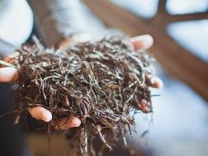 Почва для самостоятельного выращивания шампиньонов