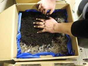 Как подготовить место под высадку шампиньонов самостоятельно